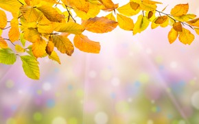 Picture autumn, leaves, colorful, background, autumn, leaves, autumn