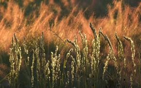 Picture autumn, grass, nature