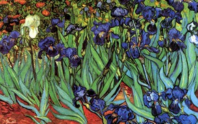 Picture Vincent van Gogh, Irises, different colors