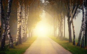 Picture road, autumn, the sun, rays, trees, branches, bright, fog, Park, dawn, morning, birch, alley, the …