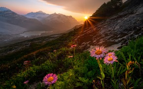 Picture the sun, rays, landscape, sunset, flowers, mountains, nature, slope, Canada, British Columbia