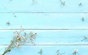Picture background, blue, Flowers, twigs