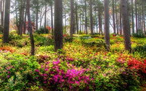 Picture trees, flowers, Park, Rhododendron