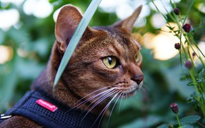 Picture cat, eyes, cat, look, face, leaves, nature, pose, sheet, glare, stems, portrait, collar, green background, …