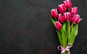 Picture background, tulips, pink