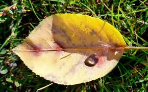 Picture autumn, Rosa, leaf