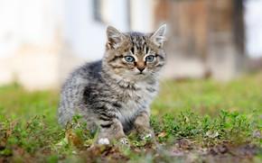 Picture grass, kitty, bokeh, Ilya Garbuzov