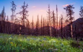 Picture forest, summer, mountains, nature