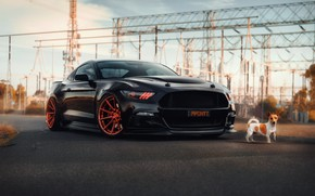 Picture Mustang, Ford, dog