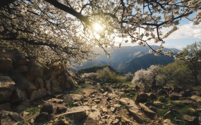 Picture the sun, trees, landscape, mountains, nature, stones, dawn, spring, morning, valley, flowering, The Caucasus, Dagestan, …