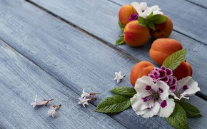 Picture flowers, background, blue, apricot