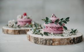 Picture cake, cream, dessert, composition