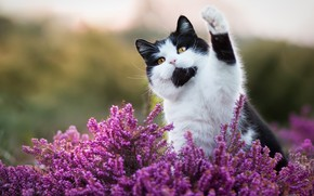Picture cat, cat, look, face, flowers, nature, pose, background, black and white, paw, cat, pink, Kote, ...