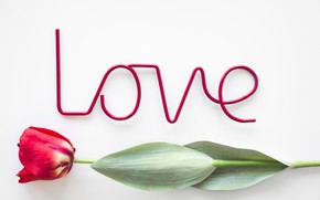 Picture love, flowers, Tulip, love, flowers, beautiful, romantic, tulip
