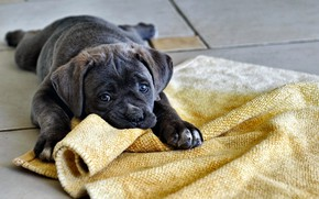Picture Dog, Game, Funny, Nice, Puppy, Nursling