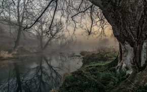 Picture autumn, fog, river, tree