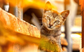 Picture cat, cat, look, face, light, portrait, yellow background, bokeh