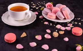 Picture tea, roses, petals, cakes, macaroon
