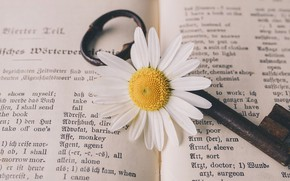 Picture Key, Flower, Vintage, Old, Nostalgic