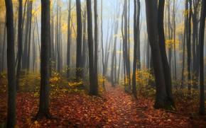 Picture autumn, forest, trees, Canada, Ontario, Canada, Ontario, fallen leaves
