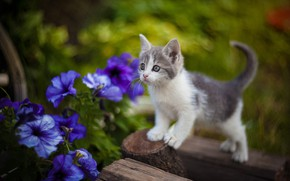 Picture flowers, blur, baby, kitty, petunias