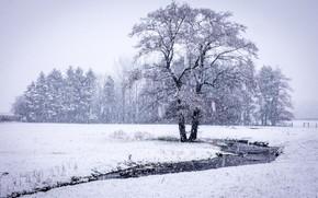 Picture autumn, snow, nature, tree