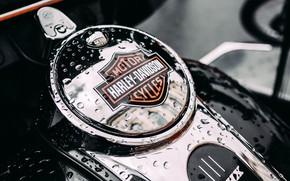 Picture drops, Moto, motorcycle, Harley Davidson, harley