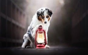 Picture each, dog, lantern