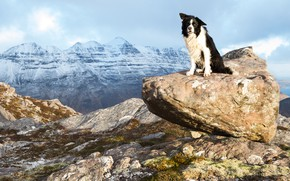 Picture look, mountains, pose, stones, stone, dog, is, the border collie, boulder, snowy peaks