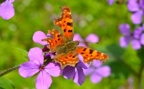 Wallpaper flower, Macro, Butterfly, Macro, Butterfly