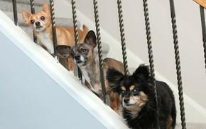 Picture dogs, ladder, trio, Trinity