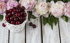 Picture flowers, berries, wood, cherry, pink, flowers, peonies, cherry, peonies