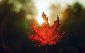 Picture autumn, light, red, sheet, the dark background, one, leaf, bokeh, autumn, maple