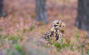 Picture forest, look, trees, flowers, background, owl, bird, glade, portrait, bokeh, owl, motley