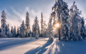 Picture winter, forest, snow, trees, the snow