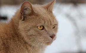 Picture cat, look, face, cat