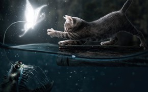 Picture Water, Night, Cat, Fish, Two, Pussy, Hunting