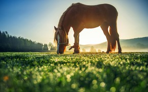 Picture greens, field, summer, the sky, grass, the sun, trees, landscape, nature, glare, horse, meadow, bokeh