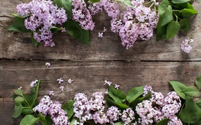 Picture flowers, wood, blossom, flowers, lilac, spring, lilac