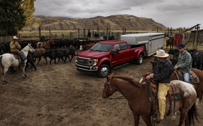 Picture Ford, pickup, cattle, the herd, Super Duty, F-450, Limited, 2019, F-series