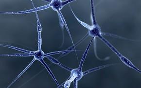 Picture structure, neurons, molecules, connection, structure, atoms, atoms, molecules, neurons, connections