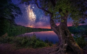 Picture the sky, night, lake, tree, England, stars, England, North Yorkshire, Yorkshire dales, Yorkshire Dales, North …