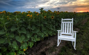 Picture sunflowers, sunset, chair
