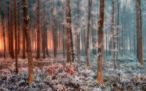 Picture frost, forest, forest, frost, Jure Kravanja