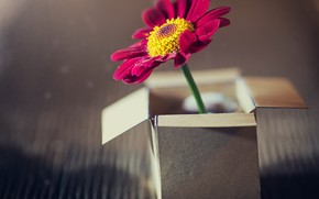 Picture flower, background, box
