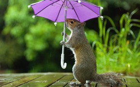 Picture nature, umbrella, table, background, rain, lilac, Board, umbrella, protein, grey, weed, stand, keeps, bokeh, under …