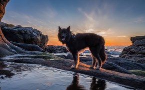 Picture sea, language, look, water, nature, pose, reflection, stones, shore, dog, pond