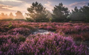 Picture the sky, trees, flowers, nature, dawn, lavender, Tomczak Michael