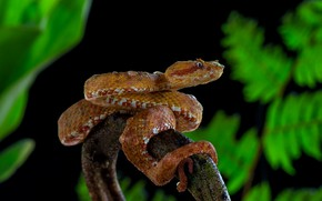 Picture leaves, snake, orange, black background