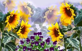 Picture Flowers, Bratki, Sunflower